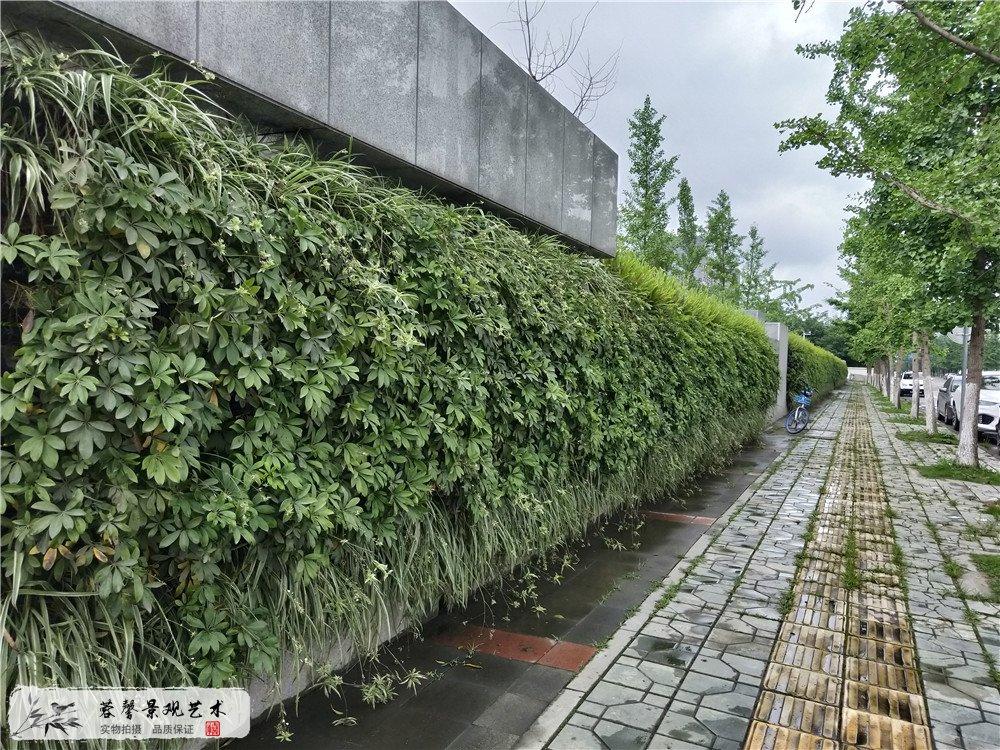 成都双流区香港城市大学研究所立体植物墙制作 (2)