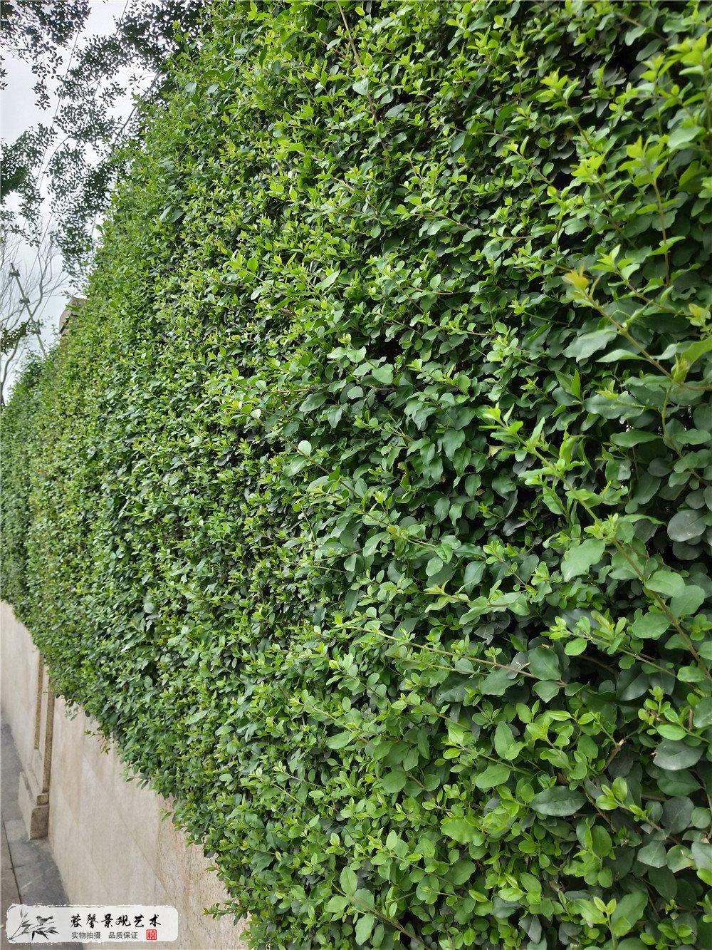 成都双流区香港城市大学研究所立体植物墙制作 (4)