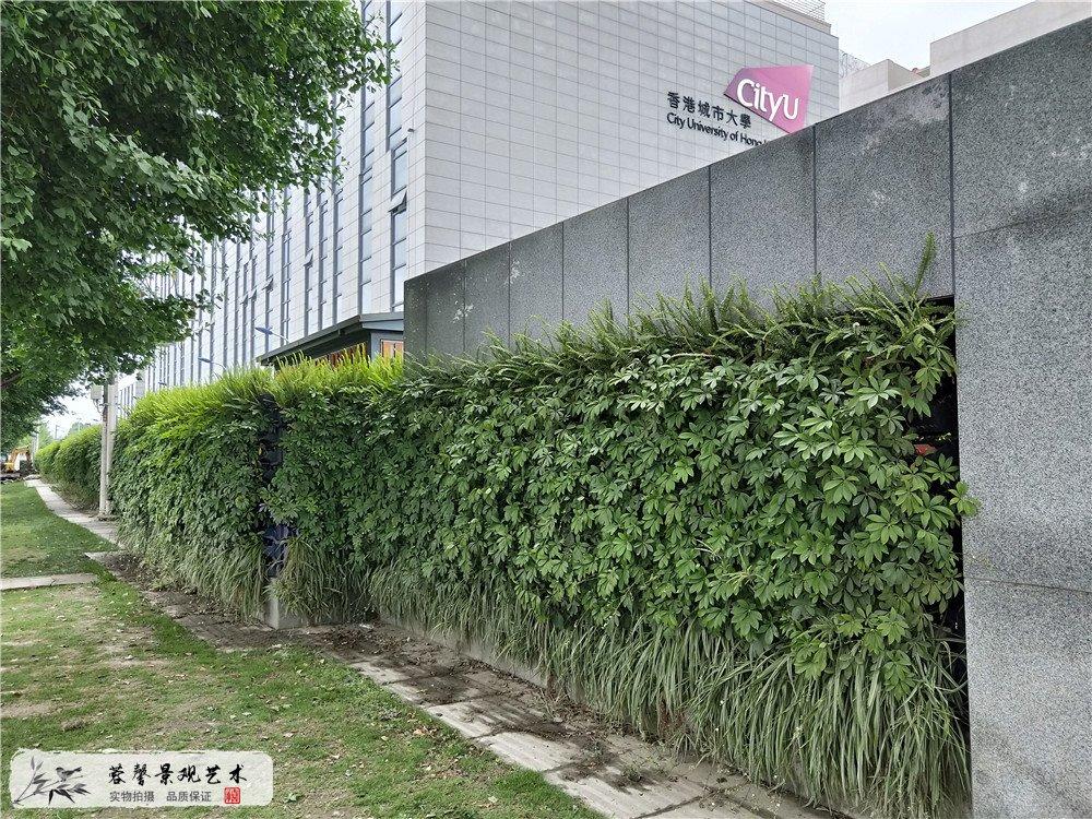 成都双流区香港城市大学研究所立体植物墙制作 (1)