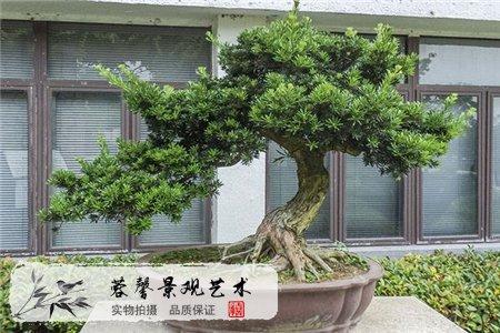 院里种树的注意事项有哪些