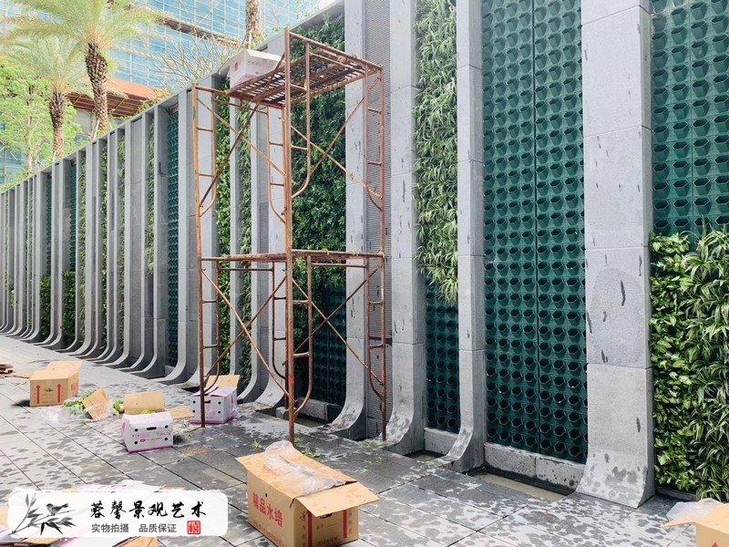 珠海横琴围墙植物墙