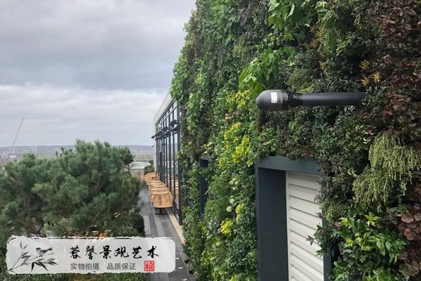 树屋酒店植物墙